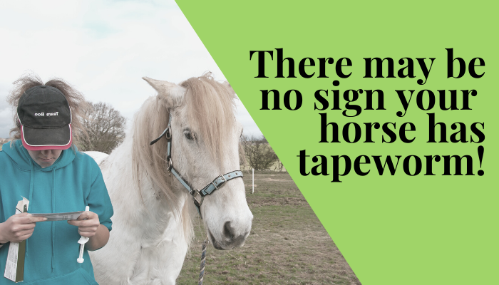 there may be no signs you horse has tapeworm you cannot tell. signs and symptoms of tapeworm in horses