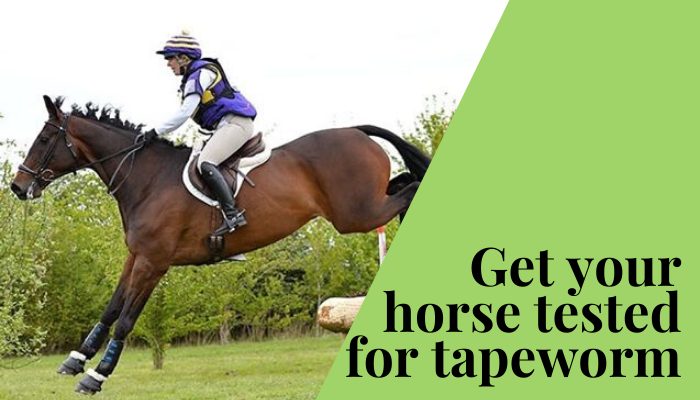 Get your horse tested for tapeworm